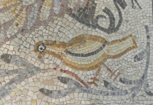Fav Rome Bird_ed