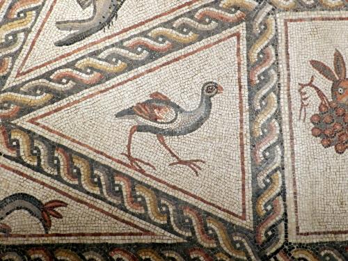 Lod mosaic, moorhen