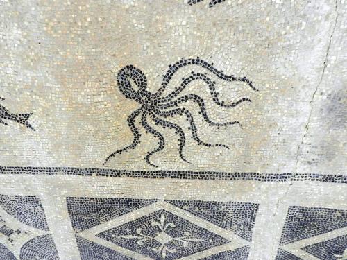 Octopos, Isthmia