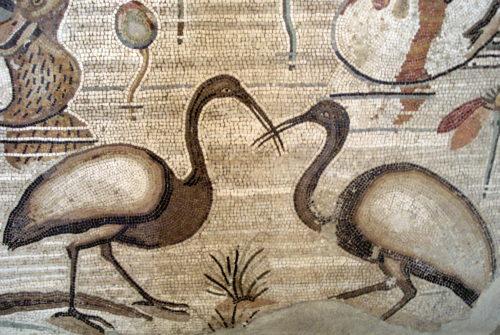 ibis roman mosaic