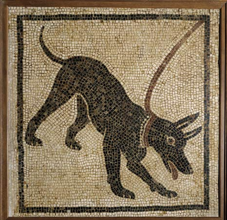 dog mosaic pompeii