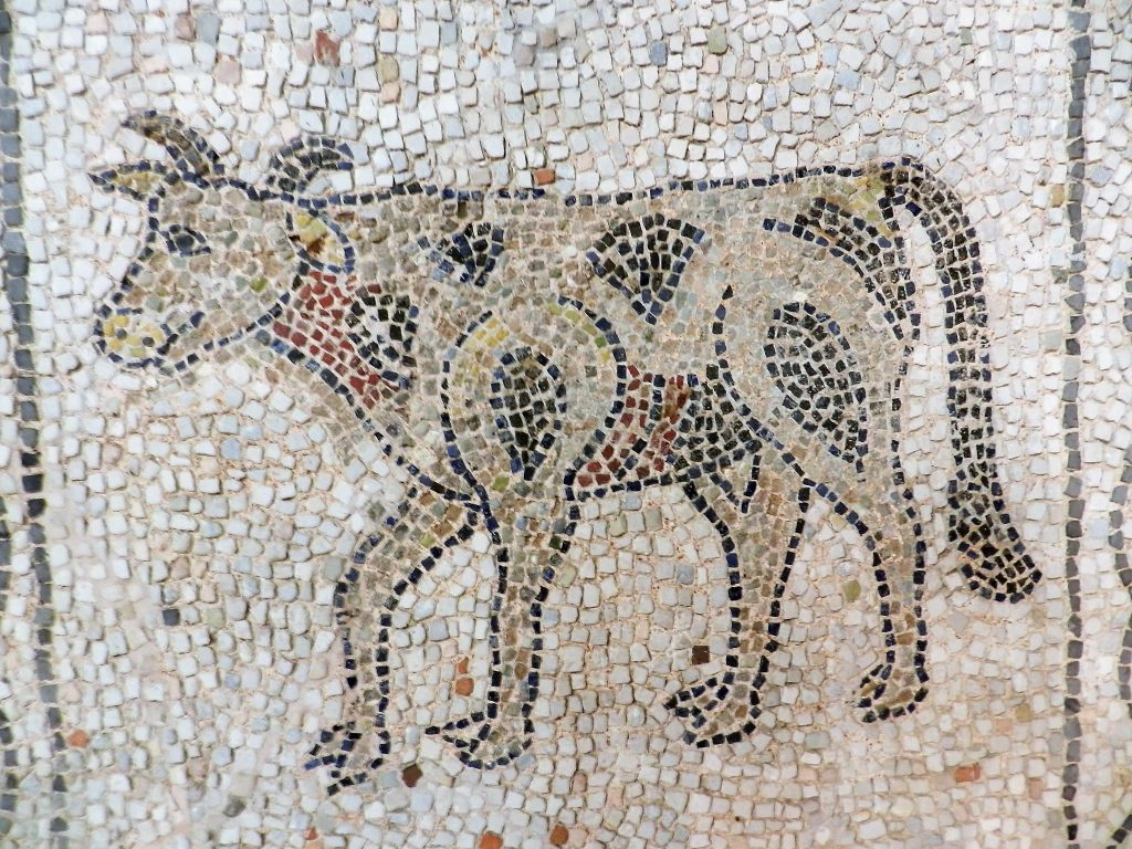 Cow. Mosaics of San Giovanni Evangelista, Ravenna.