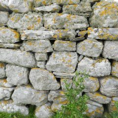 Wall with yellow lichen.
